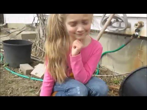 Kids Report on Tom Thumb Peas Sprouting