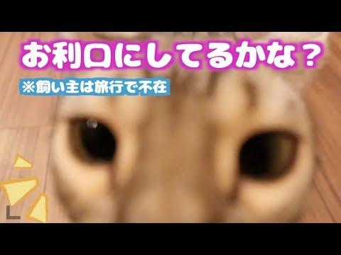【モニタリング】3日間旅行に行ってる間の猫たちの様子がこちら