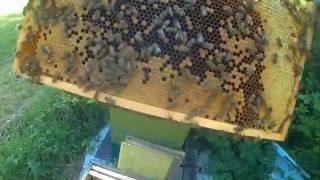 пчеловодство видео -по пчеловодству Осмотр Медовых Корпусов Мёд