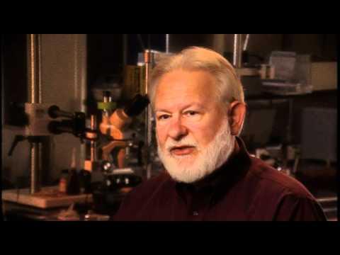 David Nichols - Relationship between DMT and Psilocybin