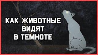 Edu: Как животные видят в темноте