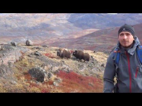Jesienna Grenlandia – tundra i lodowce okolic Kangerlussuaq