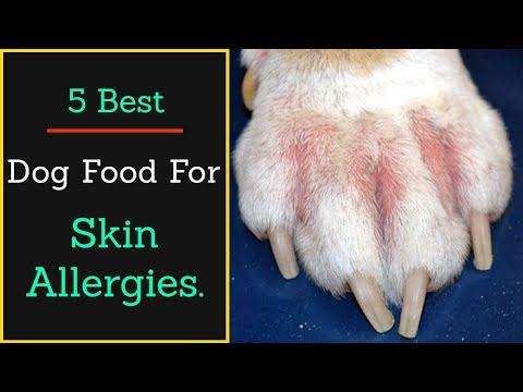 5 Best Dog Food For Skin Allergies In 2020.
