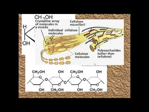 Polysaccharides for AS Biology