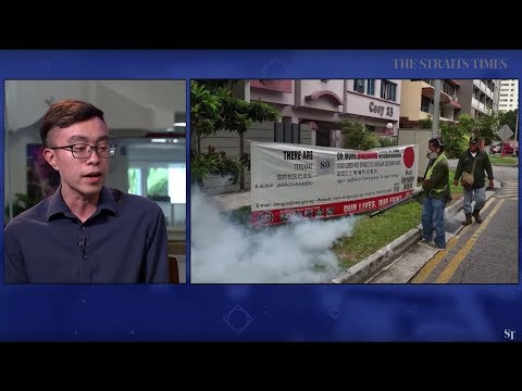 THE BIG STORY: Dengue deaths in Singapore | The Straits Times (31/07/19)