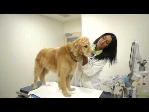 2014 American Humane Association Hero Veterinarian Category Winner - Eva DeCozio, DVM