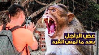 القرود هجمت علينا بسبب غباء السياح في فيتنام ? #٨
