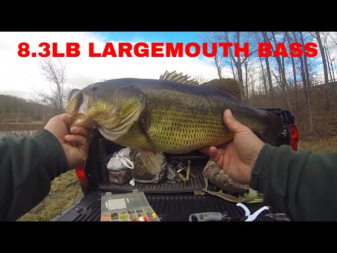 8lb 3oz Lunker Largemouth Bass That I Caught In Orange County New York