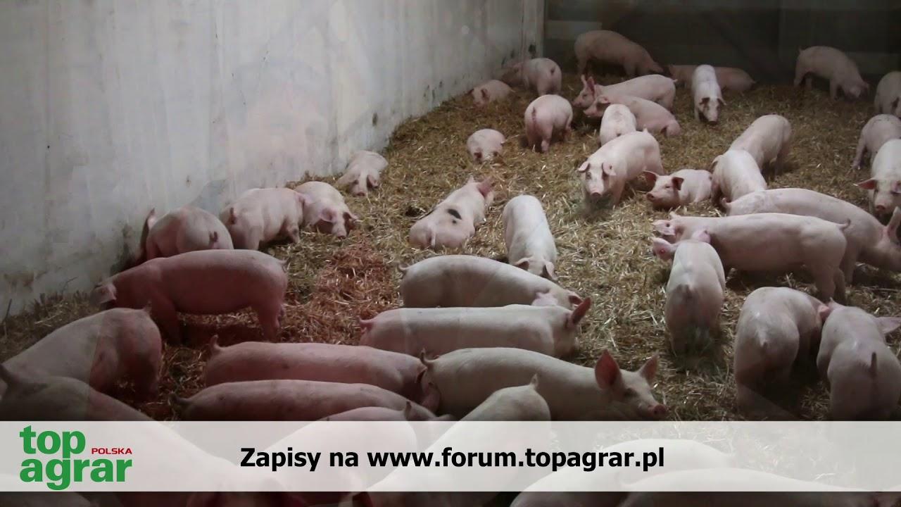 Jak zarabiać na świniach? II Forum top agrar Polska w Poznaniu