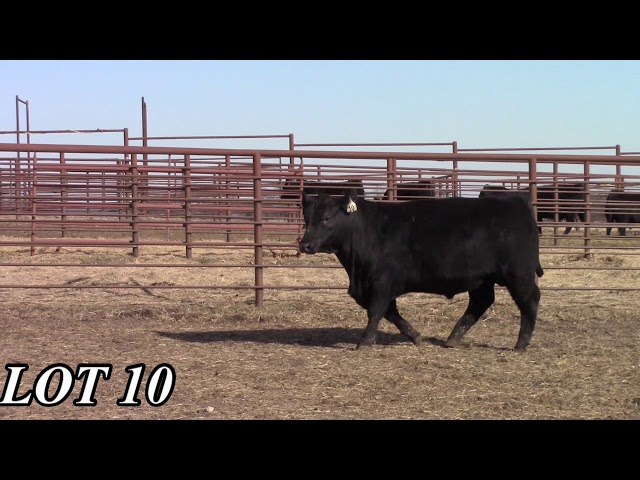 Mead Angus Farms Lot 10