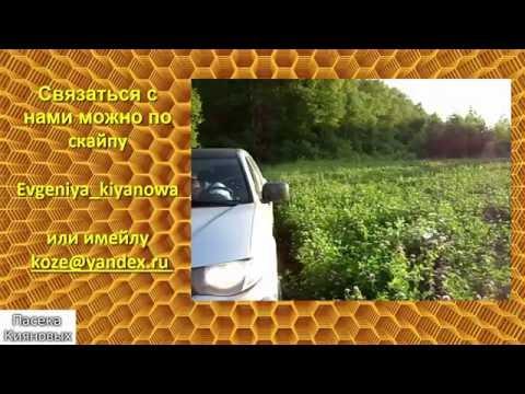 Полезные свойства и противопоказания кипрейного меда, 9