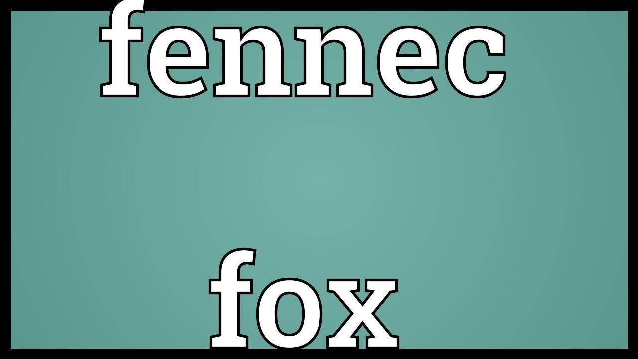 Fennec Fox Meaning Youtube