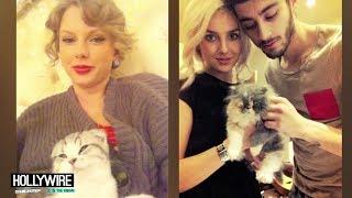 Taylor Swift Vs. Zayn Malik & Perrie Edwards: Cutest Kitten?!