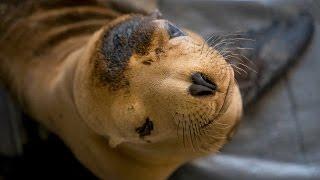 UC Davis Specialists Rescue Animals in Oil Spill