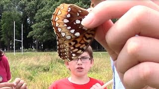 Hartford Biodiversity Camp: Studying Butterflies, Dragonflies and Insects
