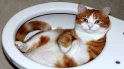Chat drôle ne - Vous allez rire très dur!