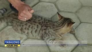Hati-Hati Virus Calici, Virus Ini Sudah Serang Ratusan Kucing & Bisa Sebabkan Kematian