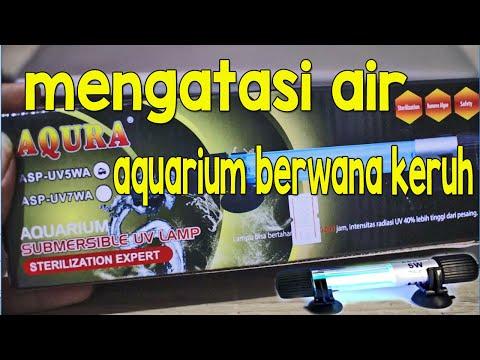 cara-menjernihkan-air-aquarium-berwarna-hijau-dan-keruh-|-rahasia-air-aquarium-tetap-jernih