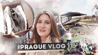 #PRAGUE ВЛОГ ДАНИ | ПИКНИК | ХУАРАЧЕ ДЛЯ ГОШИ