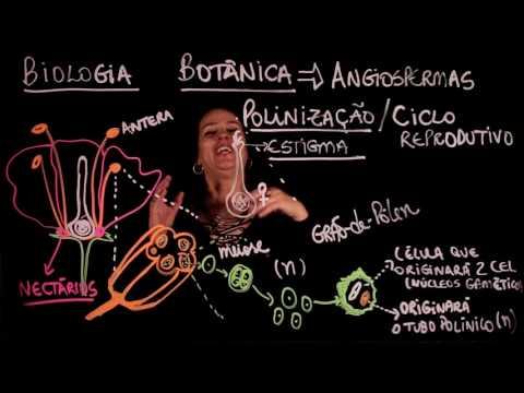 Aula 83 REINO PLANTAE Botânica   Angiospermas Parte 3 - Aulas ENEM