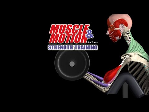 How Strength Training Works: Get In Depth Knowledge with our 3D Anatomy Software