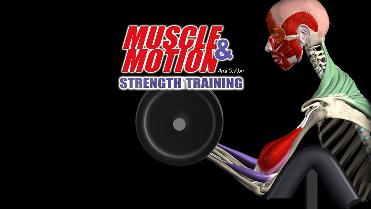 How Strength Training Works: Get In Depth Knowledge with our 3D ...
