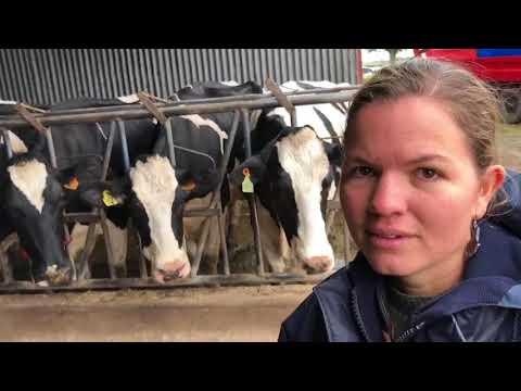 650 dairy farm in Uruguay