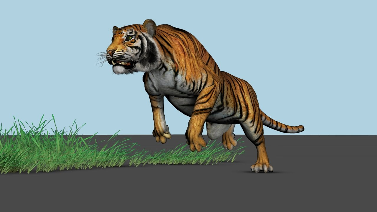 Tiger 3d Animation Maya Youtube
