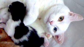 Видео о кошках. Котята резвятся