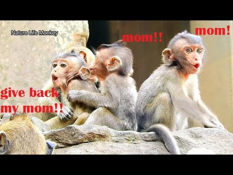 Most Pity Poor Many Baby Monkey Cry Lost Mom After Forestry Administration Take Away Their Mom