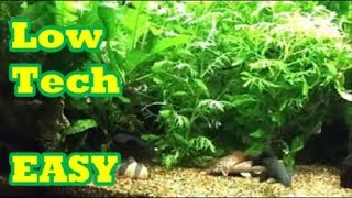 Planted 35 Gal Tropical Tank   Low Tech With Easy To Grow Live Plants #1.
