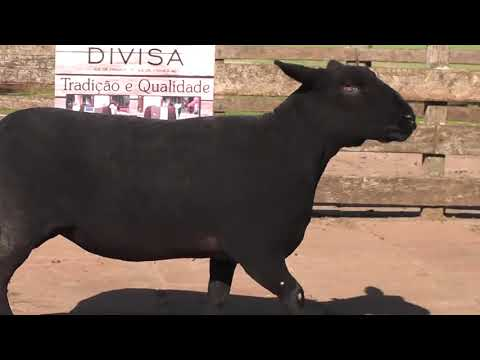 LOTE 33 - JM DA DIVISA HD NC 05