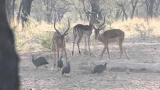namibia reise 2013 omaruru-wasserloch-tagsüber