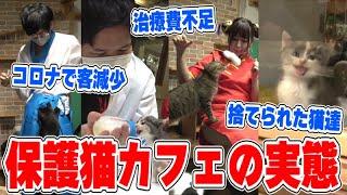 【衝撃】保護猫カフェの実態…捨てられた猫達、ゲロを吐く猫、客が来ない、厳しい現状…助けてみた