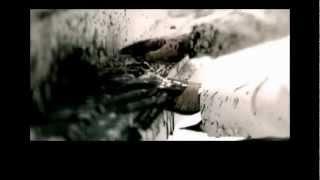 Allegro Cantabile - SUEMITSU & THE SUEMITH (PVの解説)