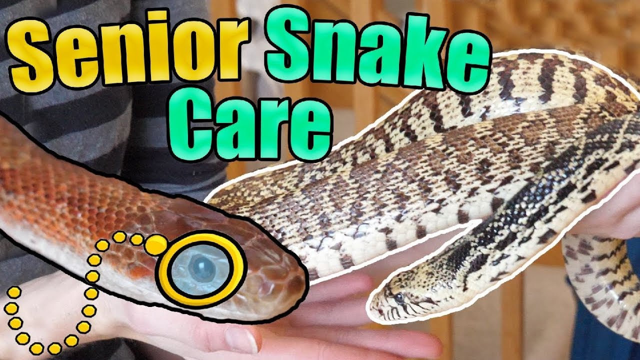 how-to-identify-and-care-for-older-snakes