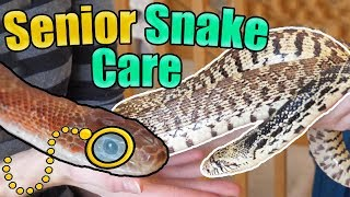 How to Identify and Care for Older Snakes