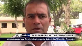 EL ALGARROBO REY DE TAMBOGRANDE-UCV NOTICIAS PIURA