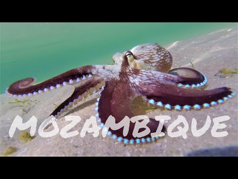 Mozambique Adventure 2017