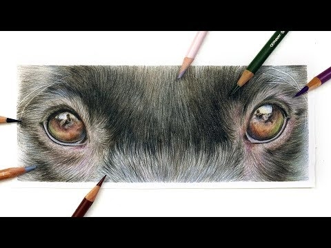 how-to-draw-dog's-eyes-with-coloured-pencil-|-drawing-tutorial