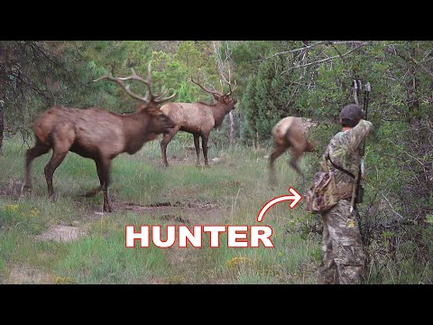 BOW HUNTING ELK in a RUT FRENZY!!! – (WE ALMOST GOT RAN OVER!)