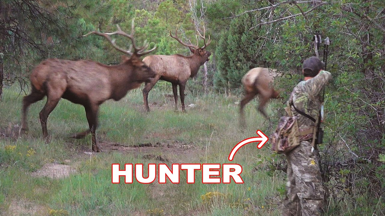 Download BOW HUNTING ELK in a RUT FRENZY!!! - (WE ALMOST GOT RAN OVER!)