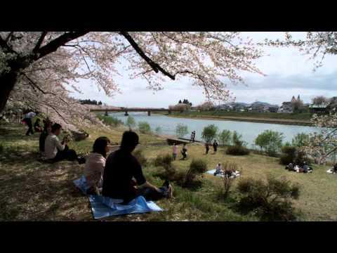 2012日本東北春之旅14 秋田縣角館檜木內川堤櫻花