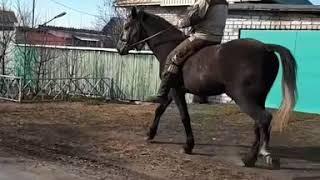 Орловский рысак (Кураж)