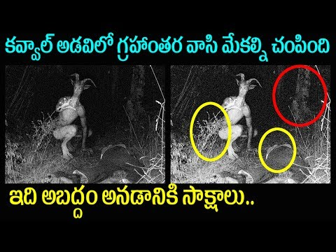 Adilabad Kavval Forest Alien Killed Sheeps | Mystery and Truths | Latest Interesting News Telugu