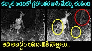 Adilabad Kavval Forest Alien Killed Sheeps | Mystery and Truths | Latest Interesting News Telugu