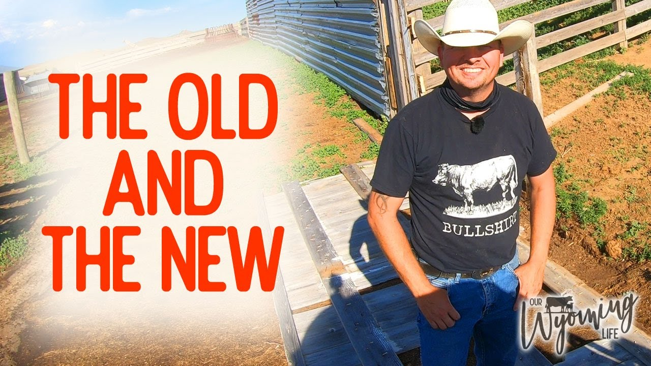 Naming the Bull & Tearing Down Old Fence