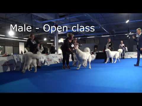 AJS 2018-Tatra Shepherd Dog