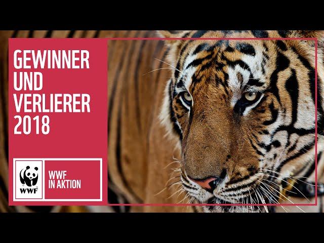 Gewinner und Verlierer im Jahr 2018 | WWF weltweit | WWF Deutschland