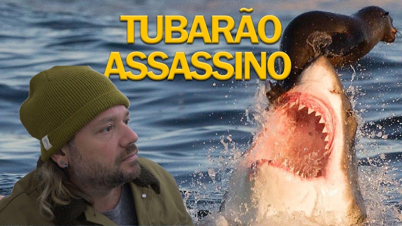 O ATAQUE DO TUBARÃO ASSASSINO, TUBARÃO BRANCO | RICHARD RASMUSSEN